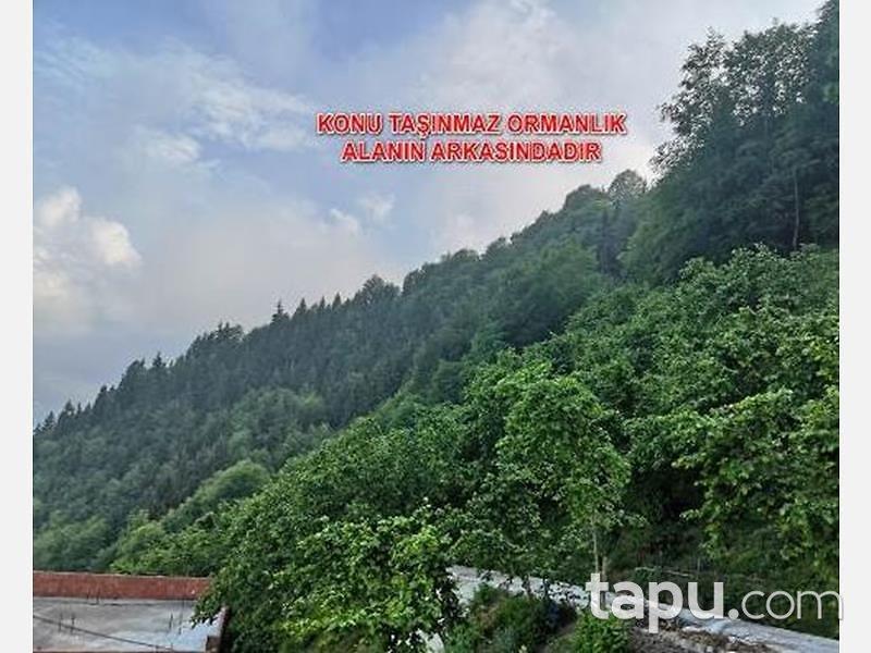 Trabzon Ortahisar Yeşilyurt Mahallesinde 1.642 m2 Fındık Bahçesi