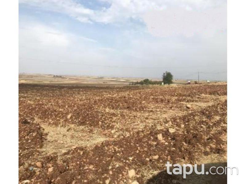 Şanlıurfa Viranşehir Elbeğendi Köyü'nde 169 Dönüm Tarla