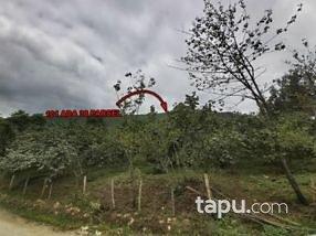 Ordu Kumru Derbent Mahallesi'nde 17601 m2 Fındık Bahçesi
