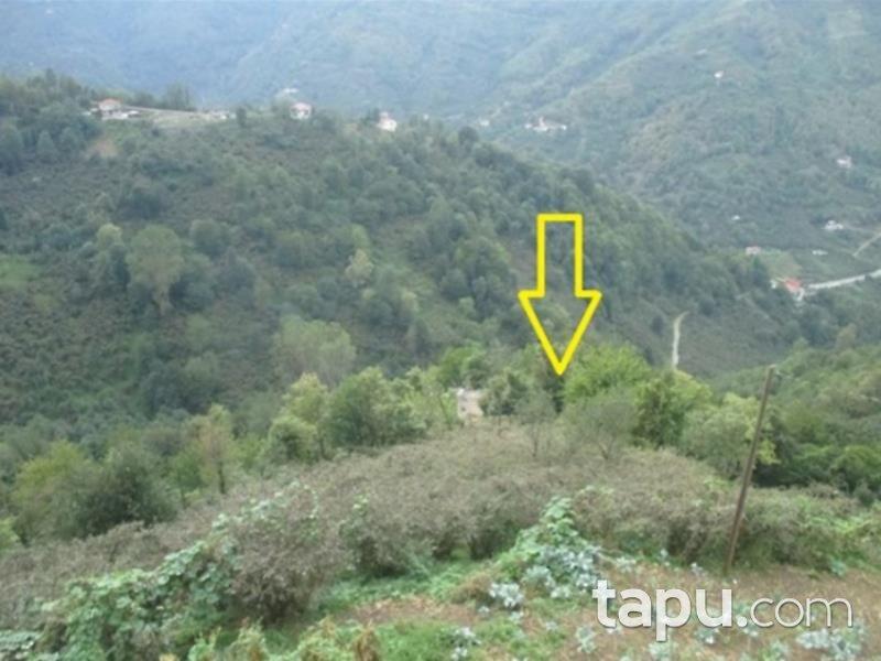 Trabzon Beşikdüzü Yeşilköy Mahallesi'nde 5329 Fındık Bahçesi