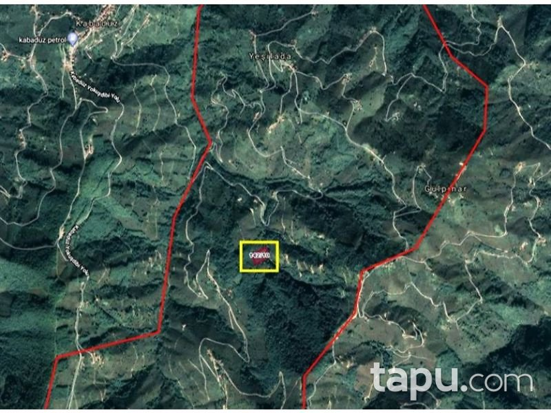 Ordu Kabadüz Yeşilada Mahallesi'nde 6805m2 Fındık Bahçesi