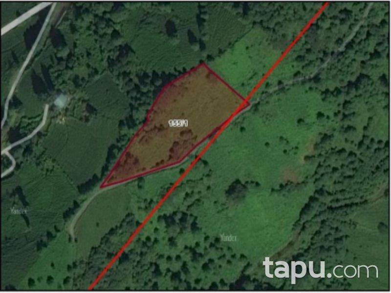 Artvin Kemalpaşa Kaya Mahallesi'nde 4610 m2 Çay Bahçesi