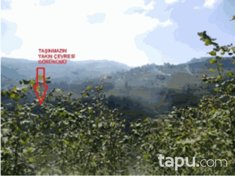 Sakarya Kocaali Yanıksayvant Mahallesi'nde 10 Dönüm Fındık Bahçesi